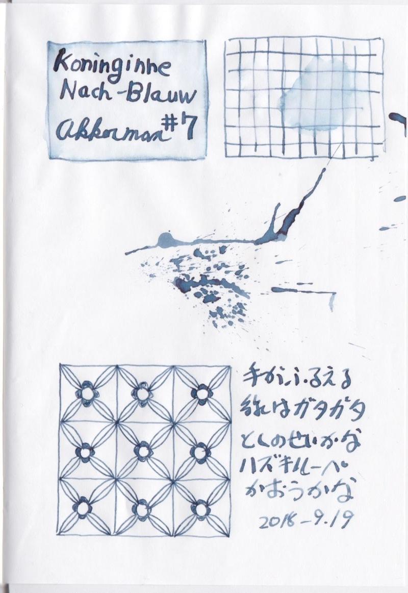 Akkerman #7 KoninginneNach-Blauw